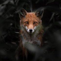Valentin-Malinov-Macedonia-entry-Open-competition-Natural-World-Wildlife-2020-Sony-World-Photography-Awards