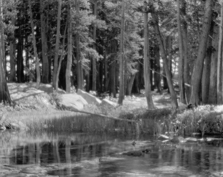 Ansel-Adams-Lodgepoe-Pines