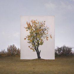 ignant-art-myoung-ho-lee-tree-11-720x860