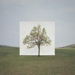 ignant-art-myoung-ho-lee-tree-17-720x903