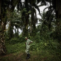 06_© Hugh Kinsella Cunningham_Wildfire (Ebola Amidst Conflict)