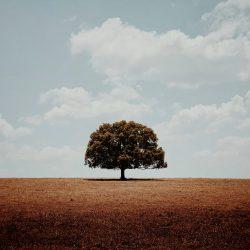 55-1st-TREES-Glenn Homann