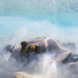 2020-underwater-photo-contest-scuba-diving-magazine4-5f69cabd9a686__700