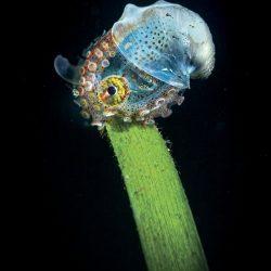 2020-underwater-photo-contest-scuba-diving-magazine5-5f69cabf7e4bd__700