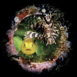 2020-underwater-photo-contest-scuba-diving-magazine7-5f69cac39b138__700