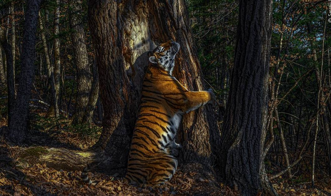 les-splendides-photos-recompensees-par-le-wildlife-photographer-of-the-year-2020