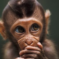 Baby-monkey-by-prabuds-Indonesia-5fabf53e6cf81__880