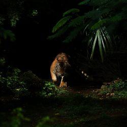 Fierce-by-pitokung-Indonesia-5fabf7128e71a__880