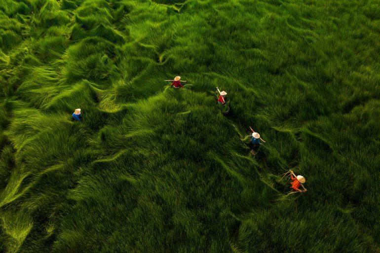 Harvesting-Grass_Khanh-Phan_Aerial-Photography-Awards-2020