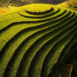 Mu-Cang-Chai-rice-terraces