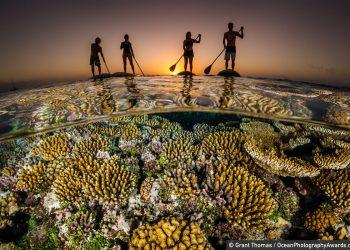 ocean-photography-awards-4