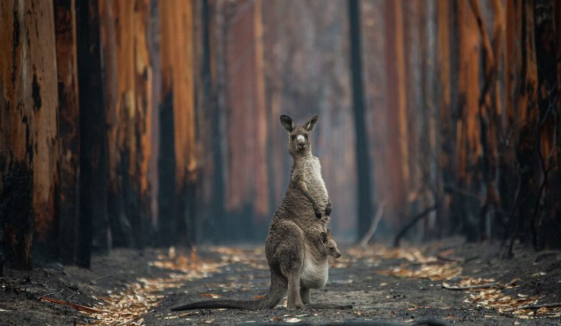 hope-in-burned-forest-by-jo-anne-mcarthur