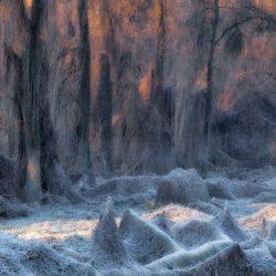 il-bosco-incantato-by-stanislao-basileo
