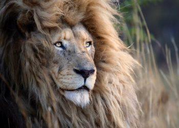 simon-needham-wildlife-photography-14
