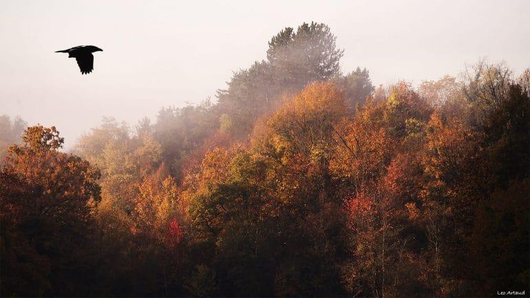 Brume d'automne