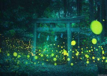 daniel-kordan-hotaru-firefly-season-japan-landscape-photography-4
