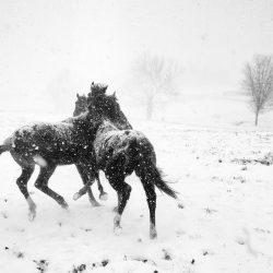 Alessandra_Manzotti_HORSE_PLAY_BlackWhite_iPhone5C_ITALY-1024x739