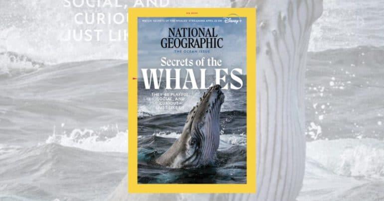 NatGeo-is-Providing-Ways-to-Help-Threatened-Creatures-and-Habitats--800x420