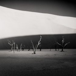 black-and-white-photography-contest-sossusvlei-trees-by-hector-izquierdo-seliva-1024x1024