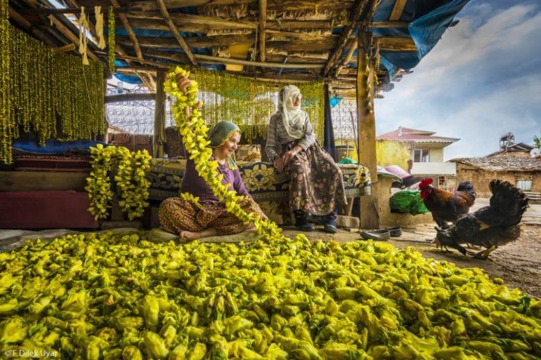2.-Harvest-F-Dilek-Uyar-Drying-Okra-Hi-Res-800x533