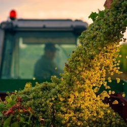 4.-Errazuriz-Produce-Oscar-Oliveras-A-Grape-View-Hi-Res-800x500