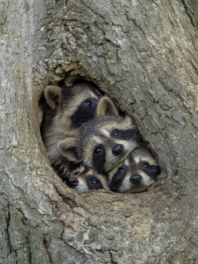 Comedy-Wildlife-Awards-Kevin-Biskaborn-Quarantine-Life-00000175
