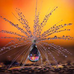 Little Dandelion umbrella by Petra Jung CEWE Photo Award Category winner Nature