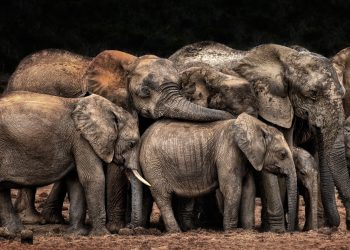 The Clan cuddles by Josef Schwarz CEWE Photo Award Category winner Animals