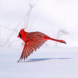 audubon-1-1536x1132