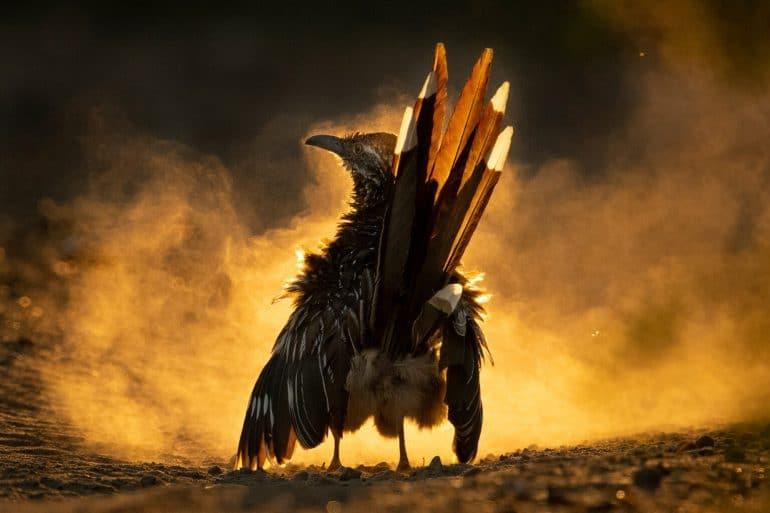 audubon-7-1536x1024