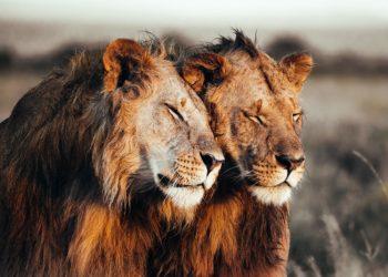 prints-for-wildlife-africa-donation-petapixel-Pie_Aerts-800x534
