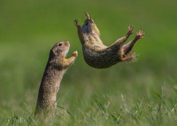 Comedy-Wildlife-Awards-Roland-Kranitz-I-got-you-1024x782