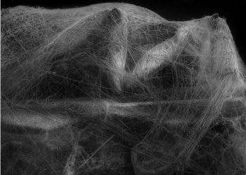 Photographie-et-sciences-Celine-Clanet-Fisheye-1200x890