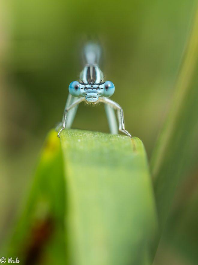 Les yeux dans les bleus