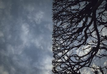 50% ciel 50% arbre