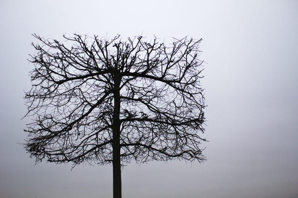 arbre cadré