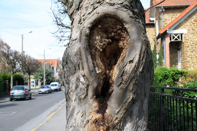 L'arbre qui avait une oreille