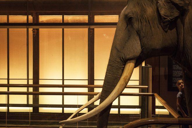 Un éléphant ca trompe énormément