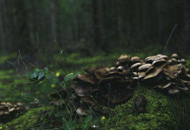 Foret de champignons