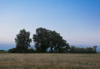 7.  Trees
