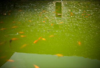 l'onde rouge du bassin