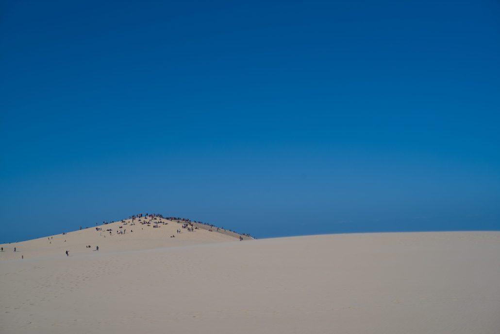 les fourmis de la dune