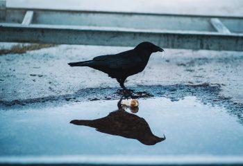 Bird(s)