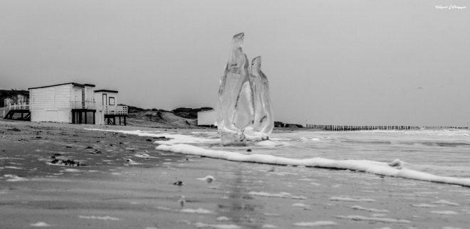 Les pingouins de glace.
