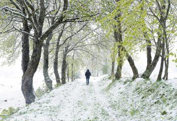 winter spring