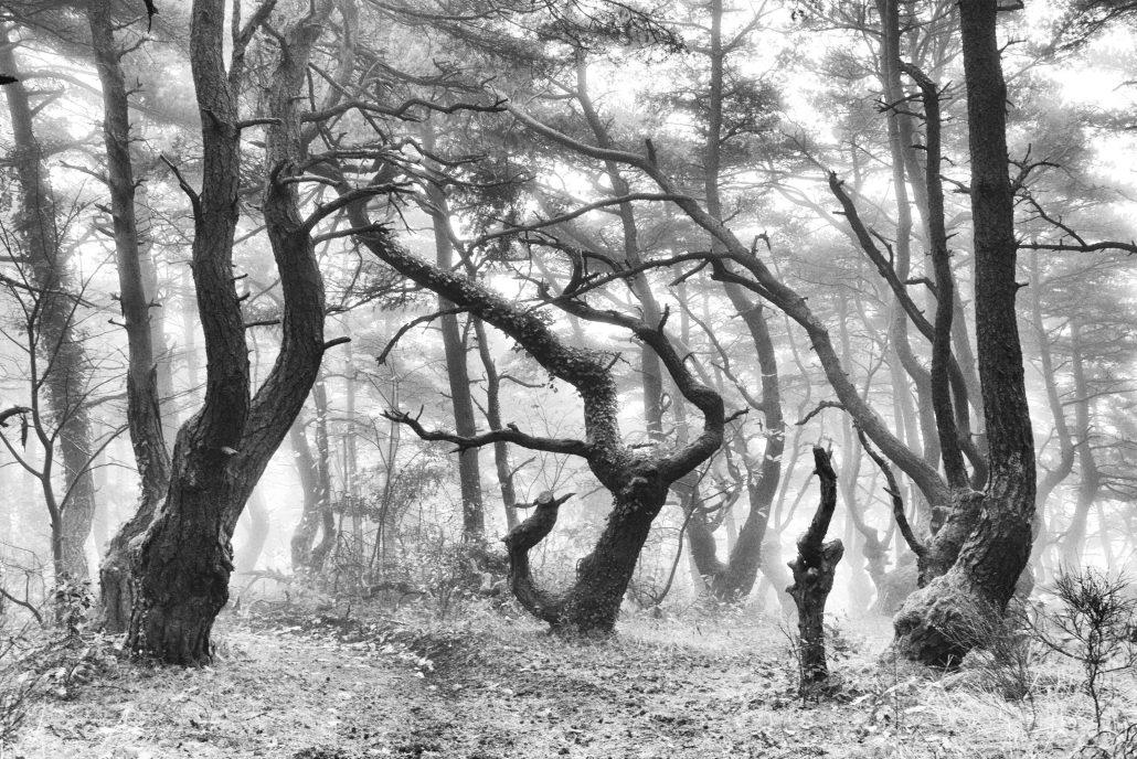 l'esprit des bois