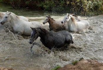 Bain en Camargue