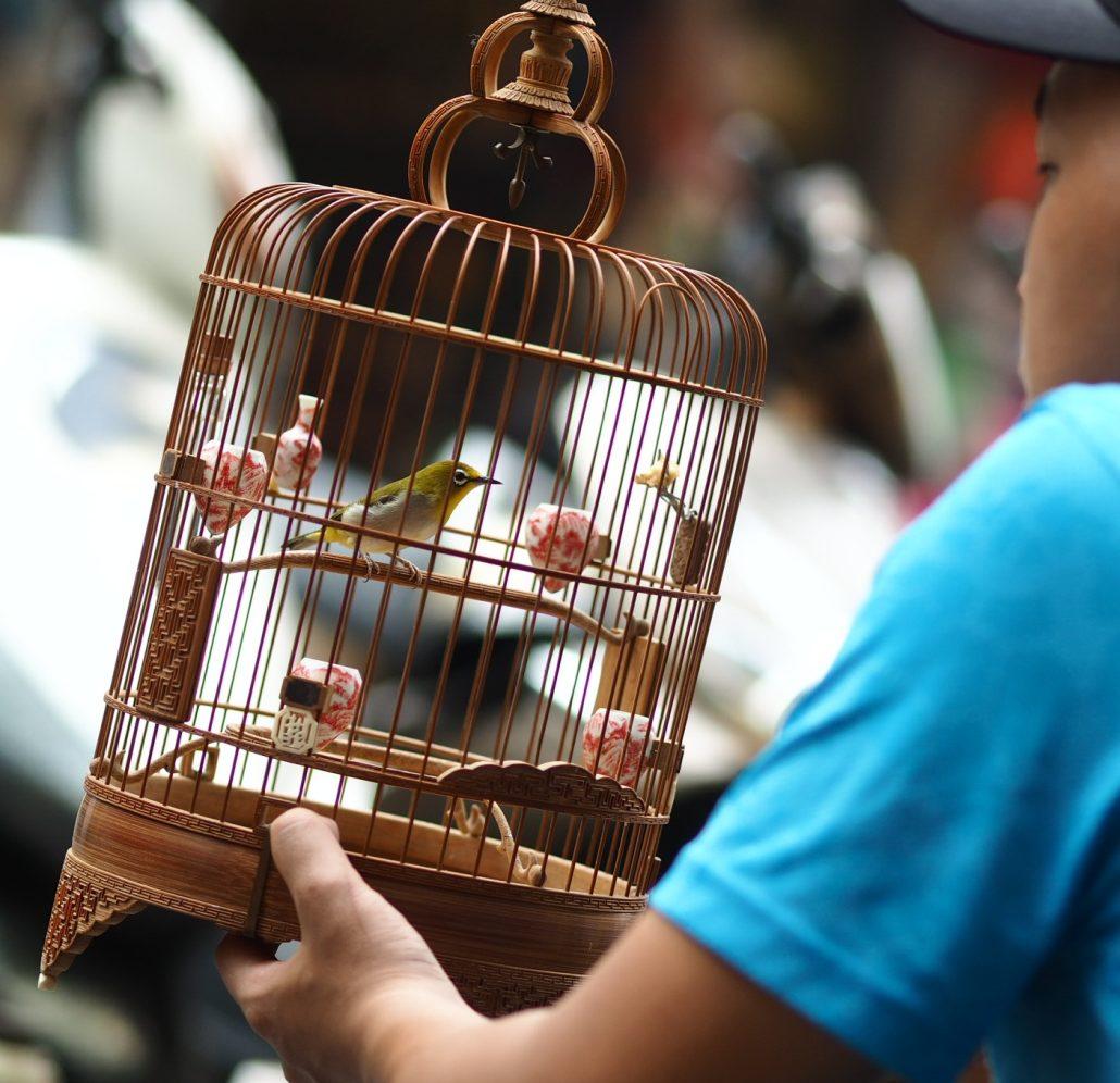 En cage