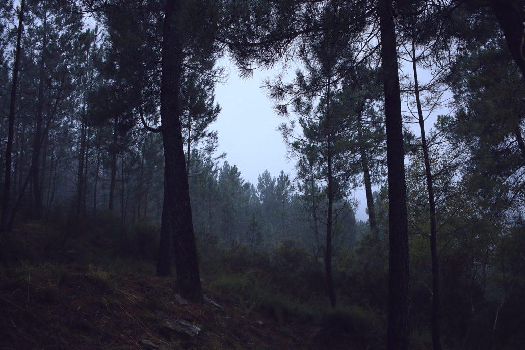 Silencieuse brume d'Octobre