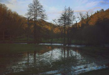 Entre les arbres et le soleil